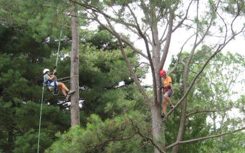interns in trees500.jpg