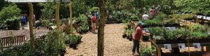Fall Plant Sale Open (Late Opening Today)