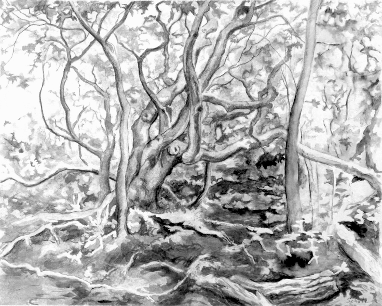 Drawing from Nature @ The Polly Hill Arboretum