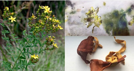 Local Wild Plants for Botanical Dyes - Virtual Class @ Virtual Class