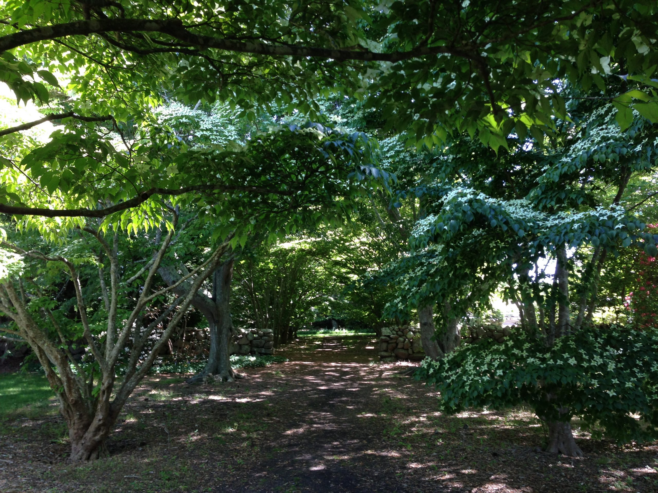 Forest Bathing @ The Polly Hill Arboretum