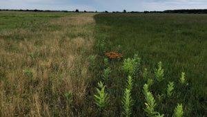Sandplain Grassland Restoration Ecology Field Trip @ Bamford Preserve